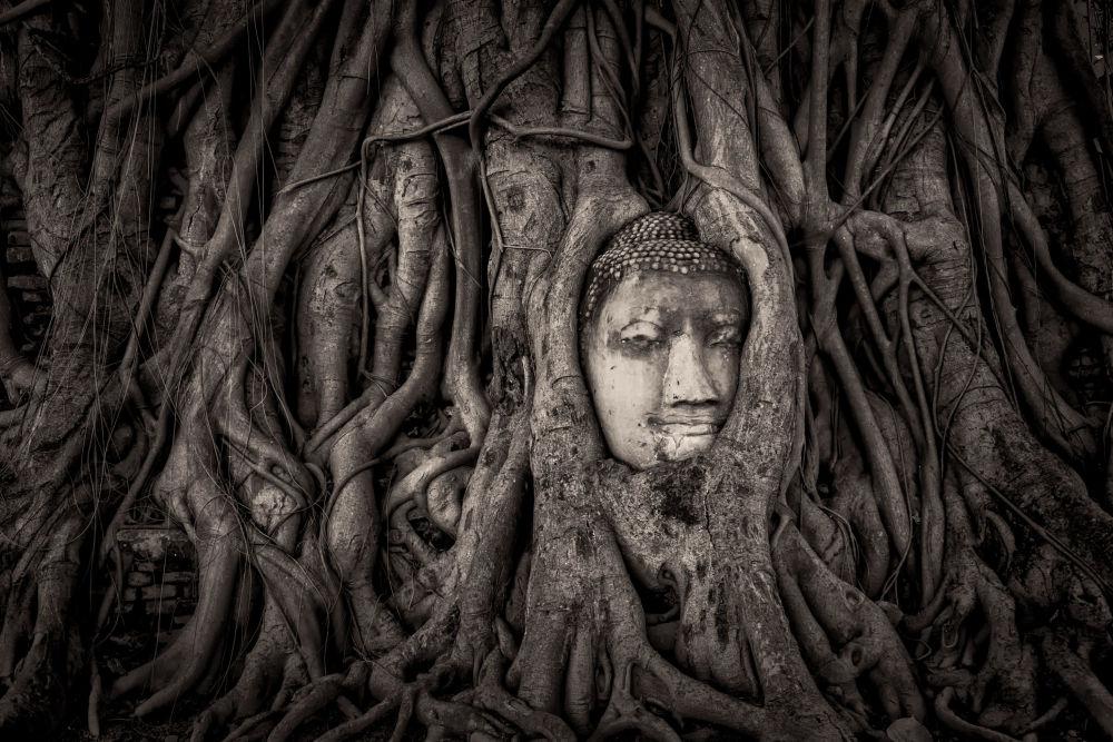 مسابقة التصوير التاريخي لهذا العام (Historic Photographer of the Year) - صورة بعنوان وات ماهاذات، تايلندا، للمصور ماثيو براوني