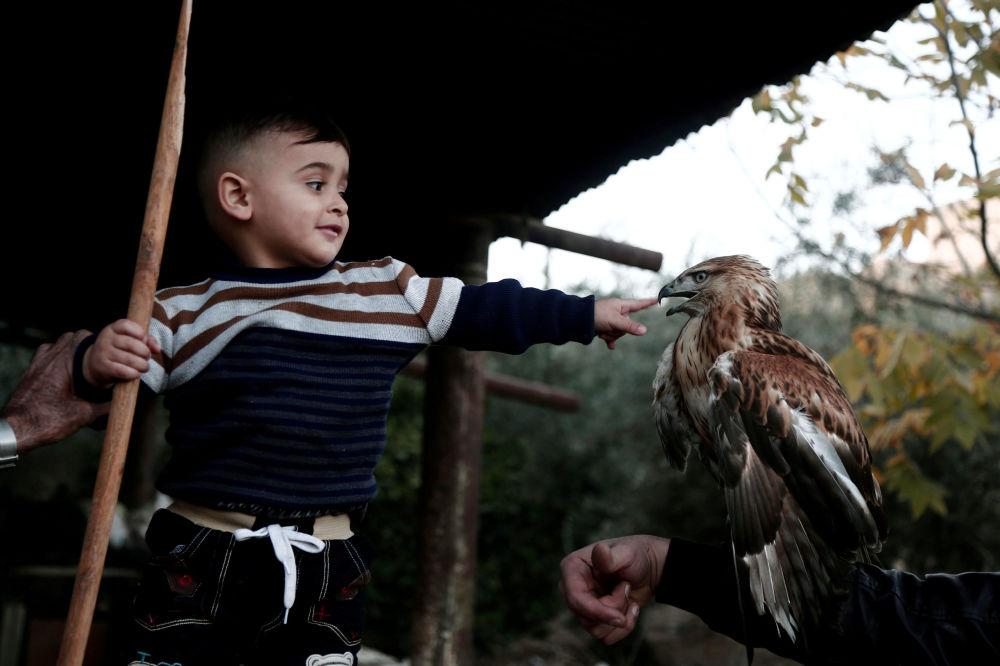 طفل فلسطيني يلعب مع صقر في بلدة طوباس بالضفة الغربية، فلسطين 3 ديسمبر/ كانون الأول 2017