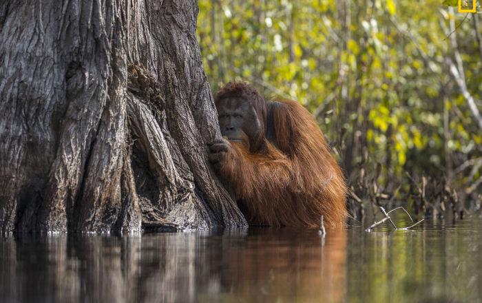 مسابقة ناشيونال جيوغرافيك للطبيعة لعام 2017