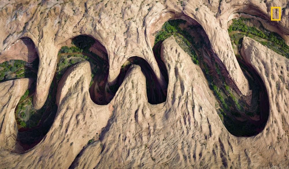 مسابقة ناشيونال جيوغرافيك للطبيعة لعام 2017 - المصور ديفيد سويندر، صورة بعنوان اخضرار على ضفاف النهر (Green vegetation blooms at the river's edge)، ولاية يوتا، الولايات المتحدة