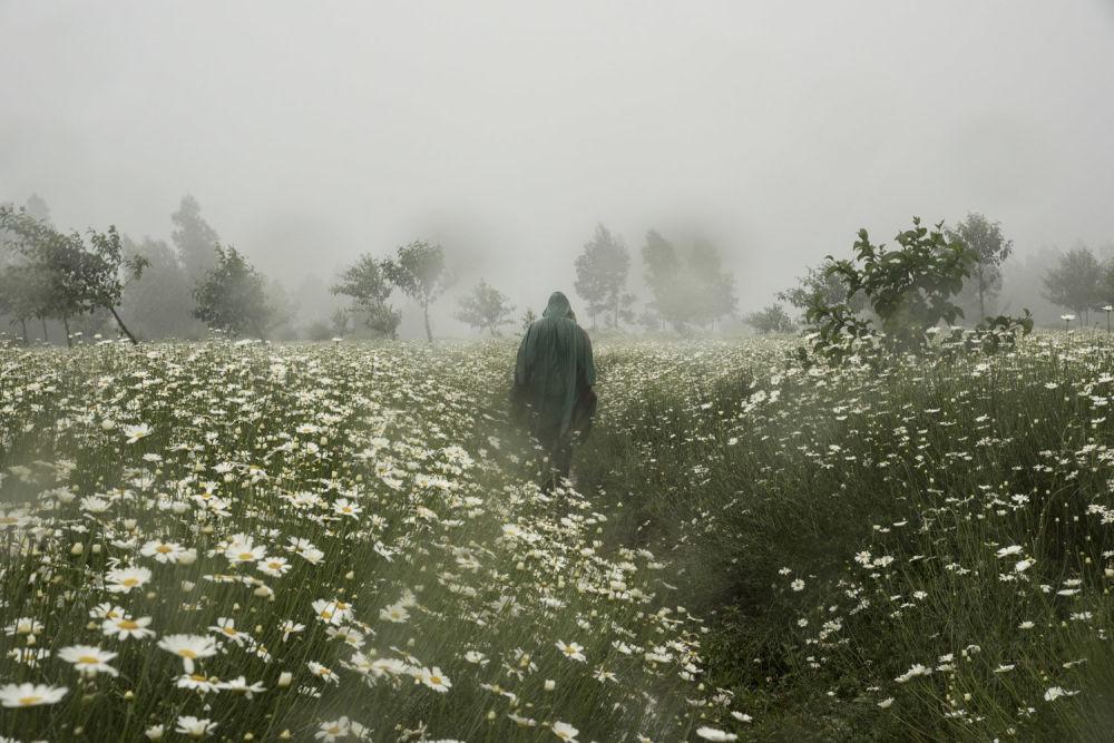 حديقة البراكين الوطنية، روندا - المصور ألكسندر زيندي الفائز في فئة جائزة المواهب الجديدة