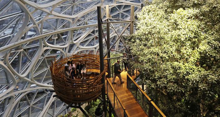شركة أمازون جعلت مقرها غابة ممطرة وسط 3 قباب في سياتل، الولايات المتحدة