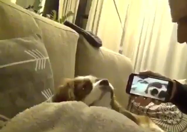 ردة فعل كلب يسمع شخيره