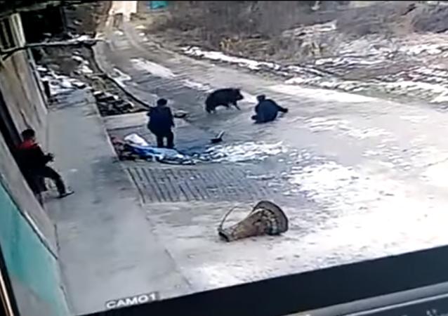 هجوم مرعب لخنزير بري على رجل مسن وزوجته