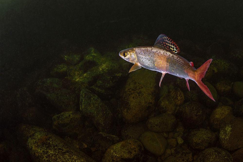 المهرجان الخامس للتصوير بيرفوزدانايا روسيا - صورة بعنوان السمكة الذهبية للمصورة أولغا كامينسكايا