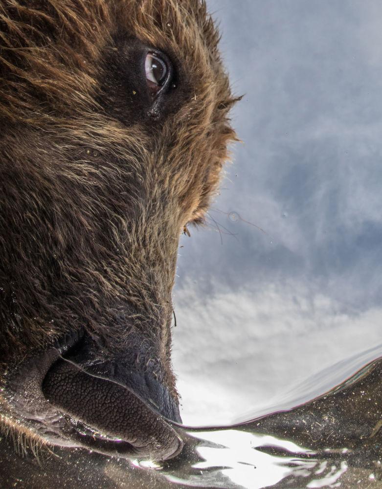 مسابقة صور تحت الماء لعام 2018 - صورة في المرتبة الثانية The Nose للمصور الروسي مايك كوروستيليف، في فئة  Portrait