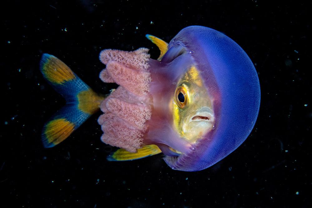 مسابقة صور تحت الماء لعام 2018 - صورة في المرتبة  الثانية In Hinding للمصور الفلبيني سكوت غاتسي، في فئة  Wide Angle