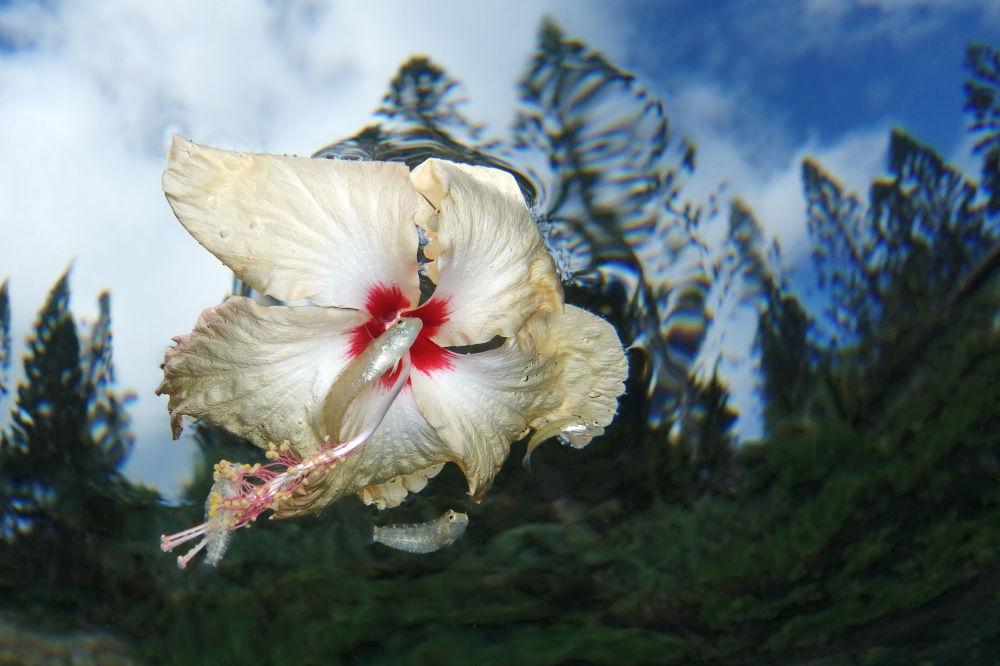 مسابقة صور تحت الماء لعام 2018 - صورة في المرتبة الثانية Flower power للمصور جاك بيرثومير من كاليدونيا الجديدة، في فئة Compact