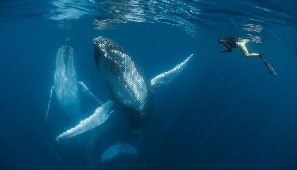 مسابقة صور تحت الماء لعام 2018 - صورة في المرتبة الثالثةDancing  للمصور النيوزيلندي سيمون ماتوسي، في فئة Compact