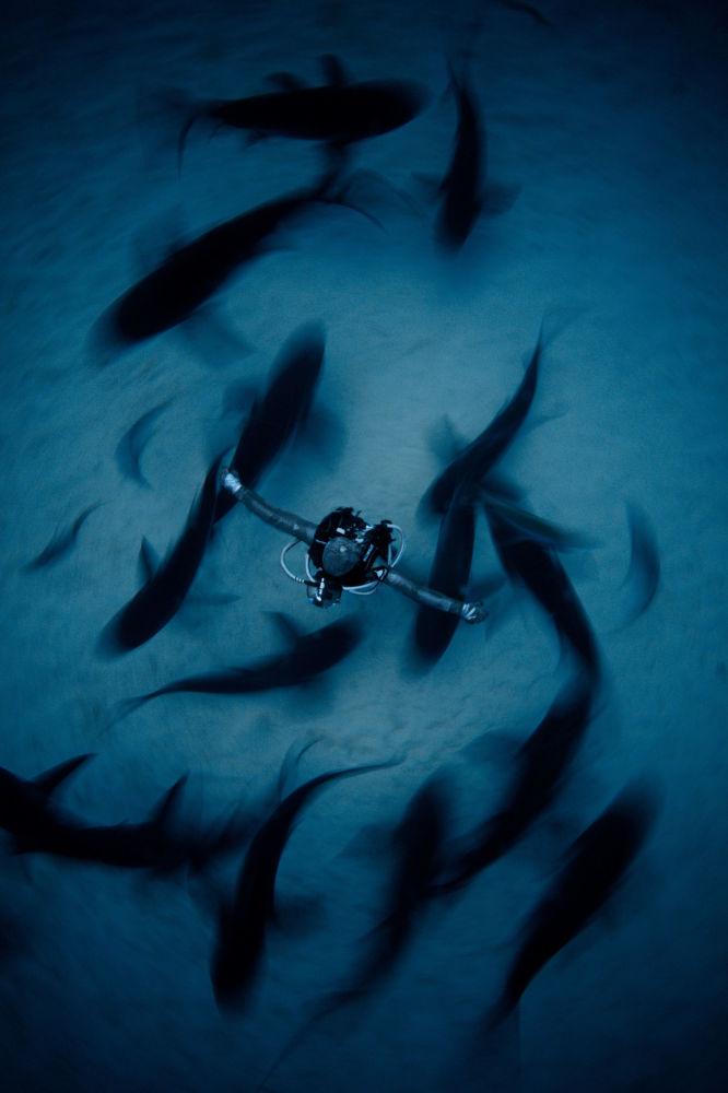 مسابقة صور تحت الماء لعام 2018 - صورة في المرتبة الثانية Surrounded  للمصور الصيني فان بينغ، في فئة Wide Angle