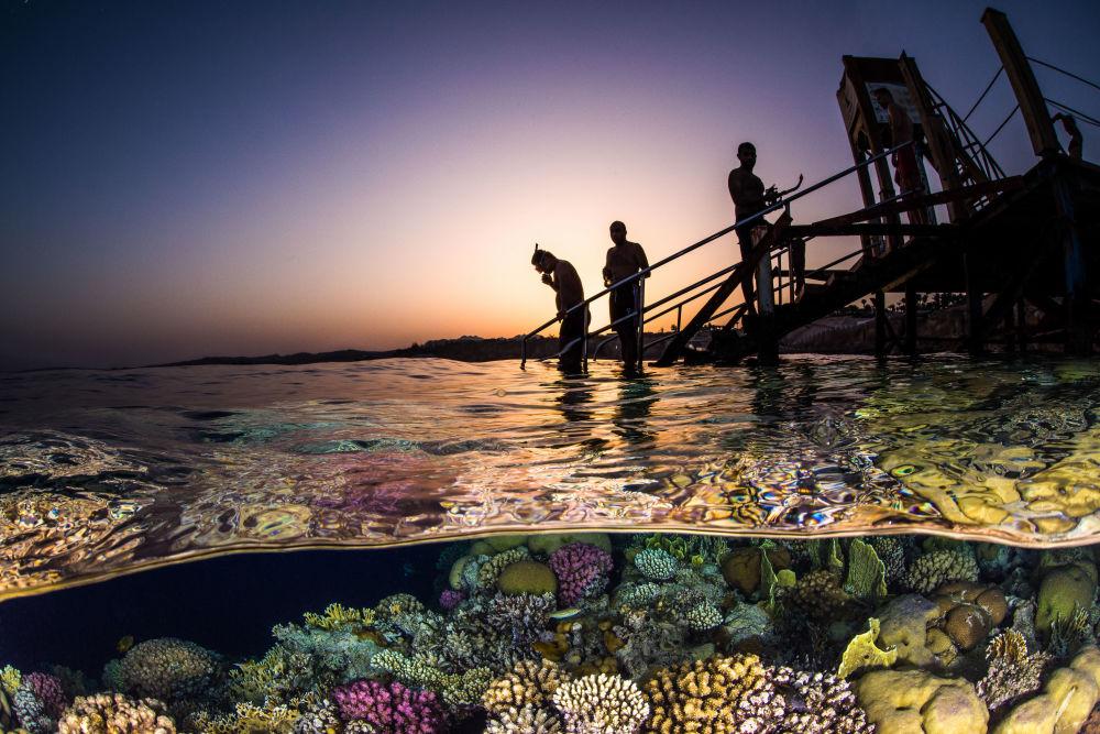 مسابقة صور تحت الماء لعام 2018 - صورة Evening Snorkel للمصور بروك بيترسون، في فئة Wide Angle