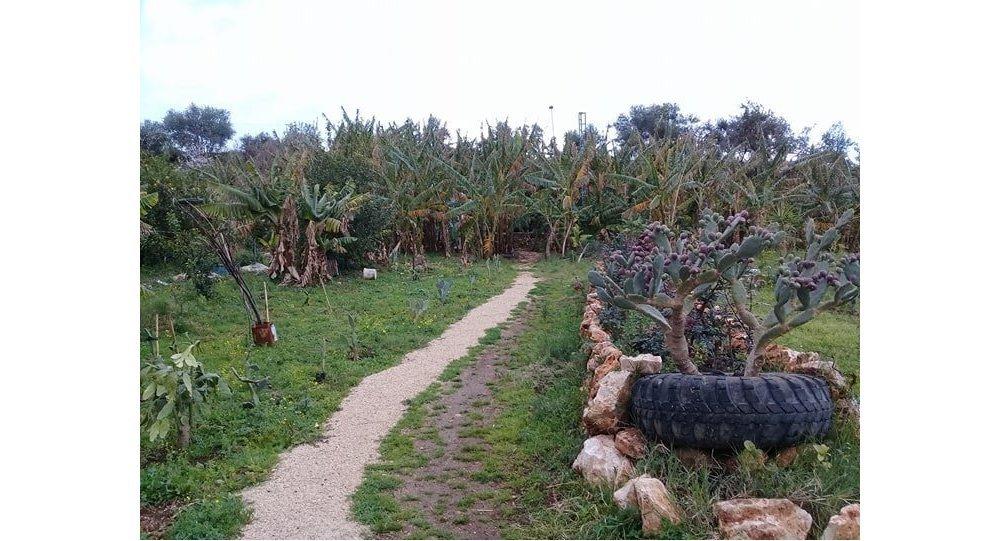 غابة استوائية صغيرة في سوريا