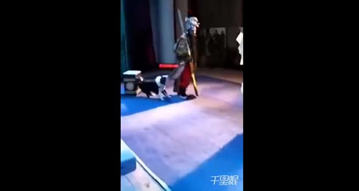كلب يهاجم ممثلا أثناء أدائه دوره على المسرح