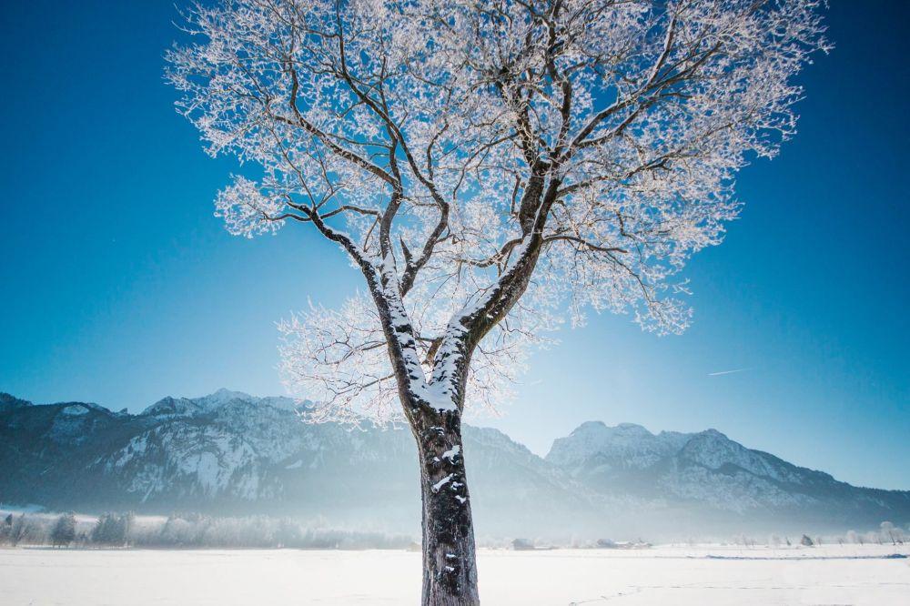 صورة لشجرة متجمدة في ألمانيا لمشروع تصوير بعيدا عن البيت
