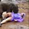 فيل يهاجم سائحة في تايلاند