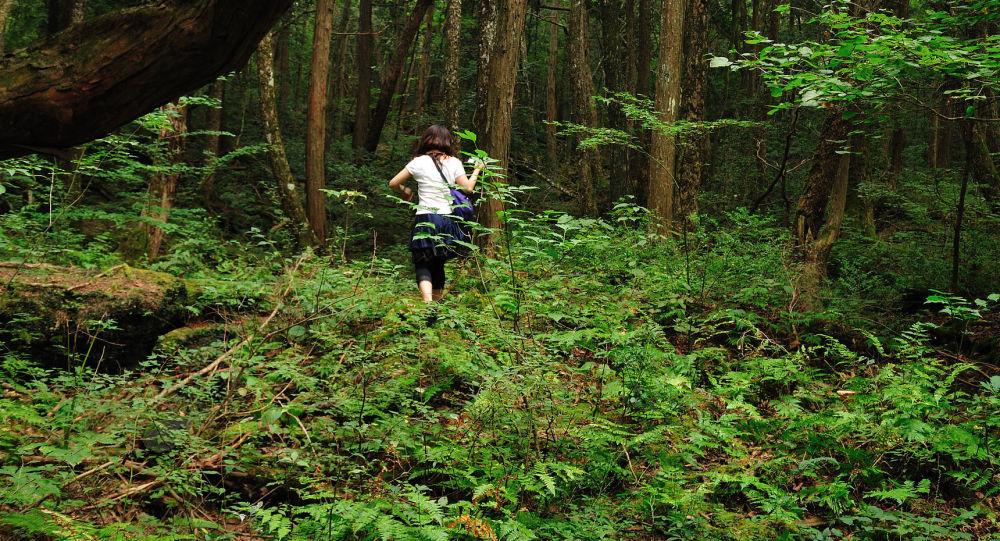 غابة أوكيغاهارا (سهل من الأشجار الخضراء) وغابة دزيوكاي (بحر من الأشجار) في شمال جبل فوجي، اليابان
