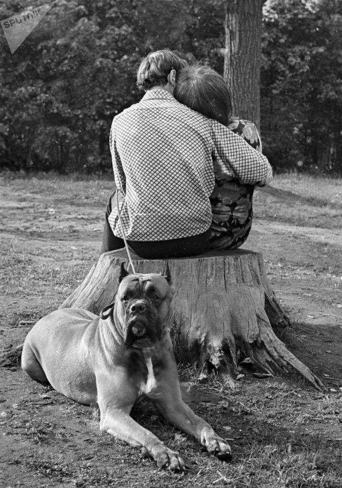 عاشقان في حديقة، عام 1965