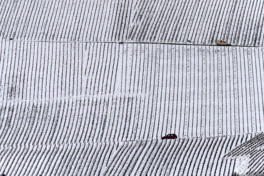 حقول العنب في منطقة شامبان، فرنسا 19 مارس/ آذار 2018