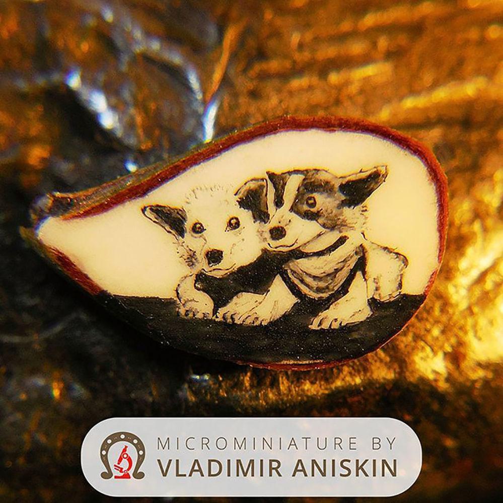 من أعمال رسام الفن الدقيق الروسي فلاديمير أنيسكين - رسم لأول الكلاب التي انطلقت في رحلة إلى الفضاء بيلكا وستريلكا، على نصف بذرة التفاح