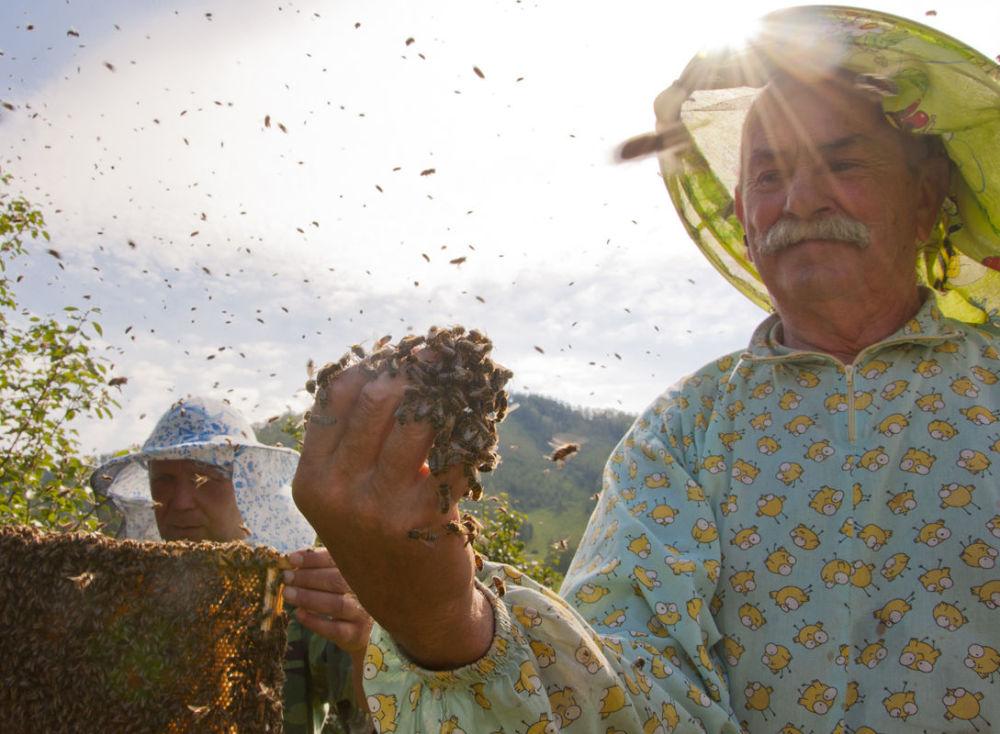 مسابقة أفضل تصوير في روسيا 2017 - صورة عرس النحل للمصور ألكسندرا غوربونوفا