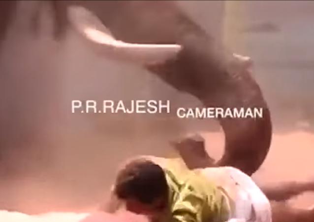 لحظة سحق فيل غاضب لرجل حتى الموت