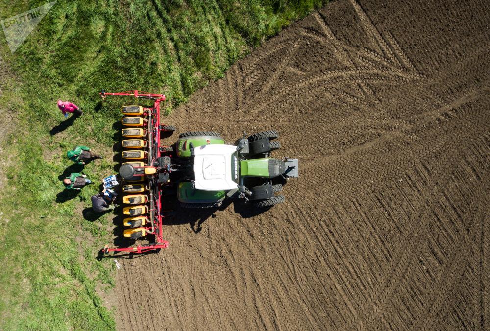 زرع بذور بنجر السكر في قرية لادوجسكايا