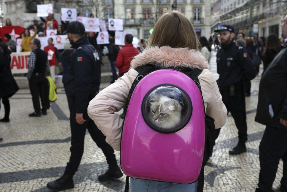 امرأة تحمل قطة في حقيبة الظهر لمشاهدة مظاهرة أقيمت لدعم الرئيس البرازيلي السابق لويس إيناسيو لولا دا سيلفا في لشبونة ، الاثنين 9 أبريل/ نيسان 2018
