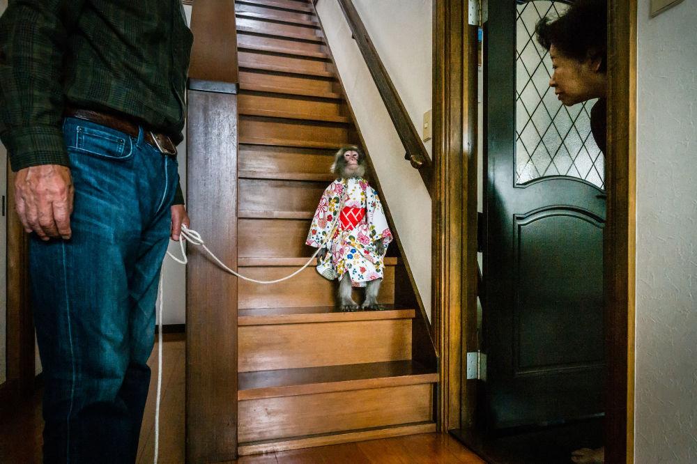 مسابقة صور الصحافة العالمية لعام 2018 - صورة بعنوان من تقرير لم يعد مقدسا للمصور جاسبر دويست من هولندا، الفائزة بالمرتبة الثانية في فئة التصوير الطبيعة