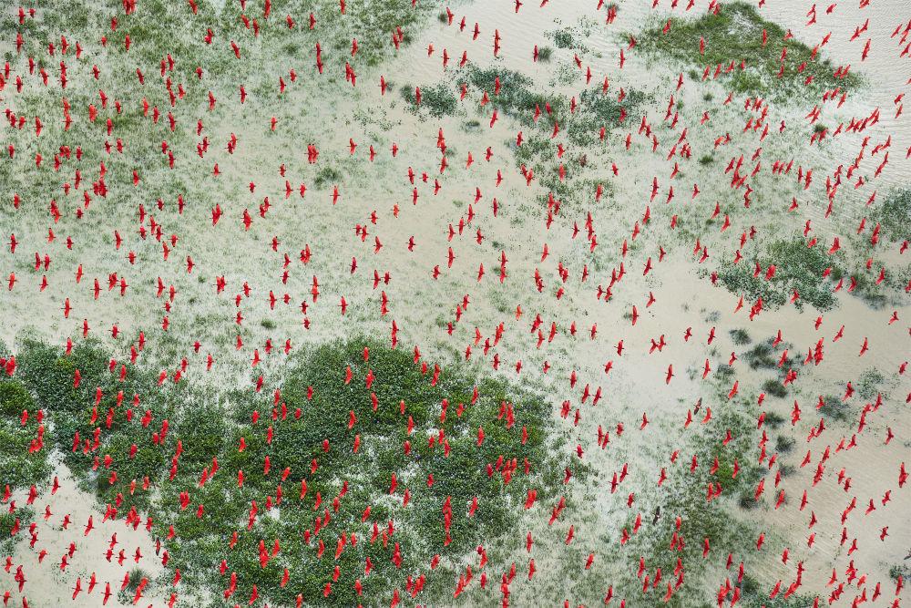 مسابقة صور الصحافة العالمية لعام 2018 - صورة بعنوان الجنة تحت التهديد، للمصور دانيال بيلترا من إسبانيا/ الولايات المتحدة، الفائزة بالمرتبة الثالثة في فئة البيئة