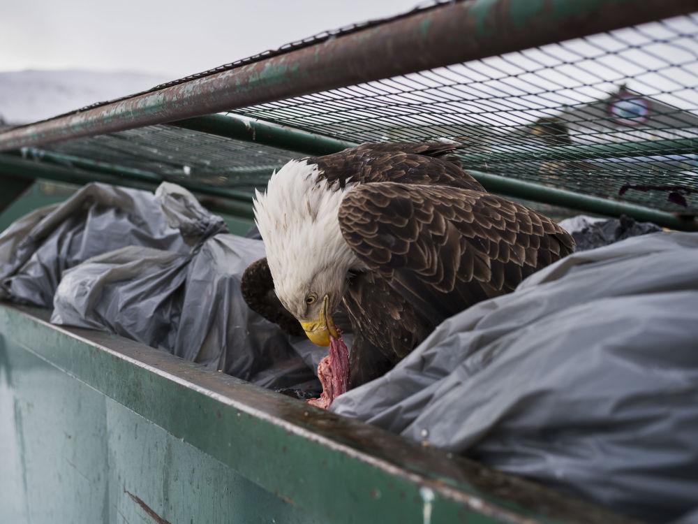 مسابقة صور الصحافة العالمية لعام 2018 - صورة بعنوان غطاس القمامة، للمصور كوري أرنولد من الولايات المتحدة، الفائزة بالمرتبة الأولى في فئة الطبيعة