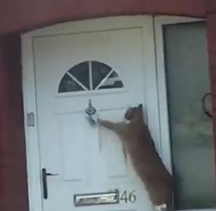 القطة الأكثر تهذيبا في العالم