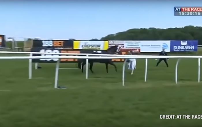 مذيعة توقف حصان هائج على الهواء مباشرة