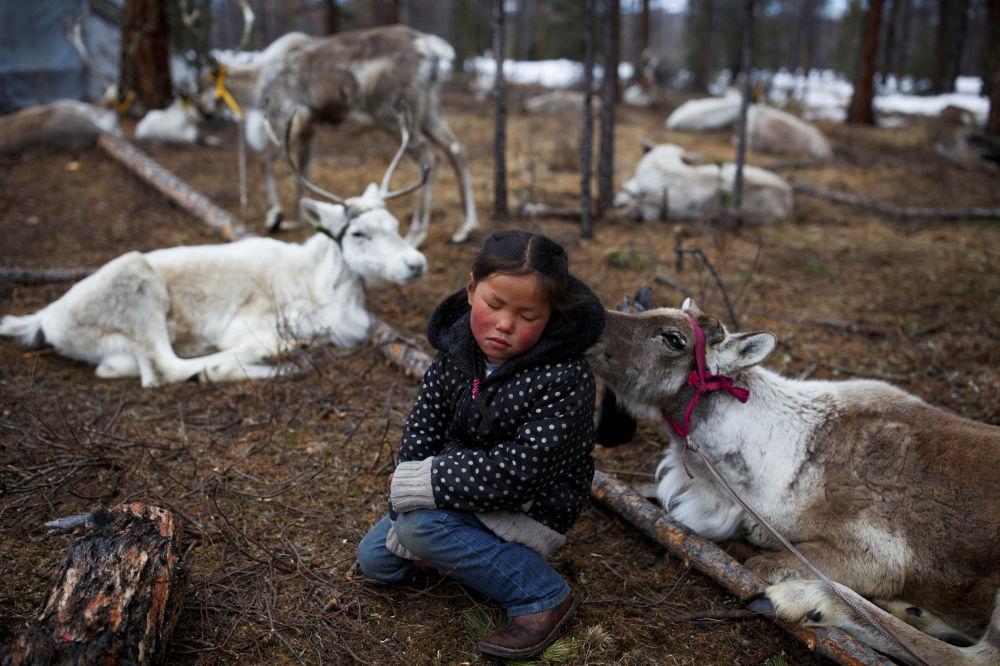 ابنة الراعية، البالغة من العمر ست سنوات، تجلس بين الرنة عائلتها في غابة بالقرب من قرية تساغانور، منغوليا 21 أبريل/ نيسان  2018