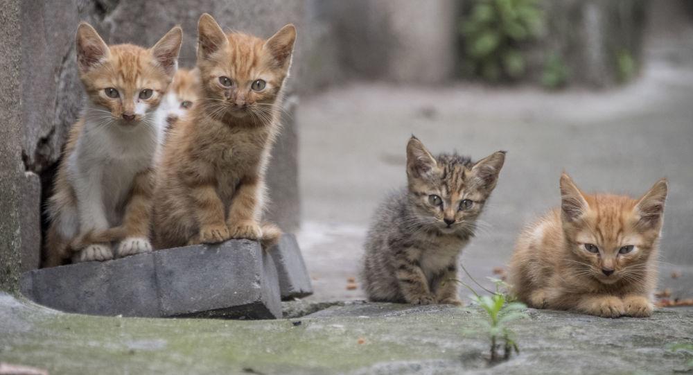 خمس قطط صغيرة  2018