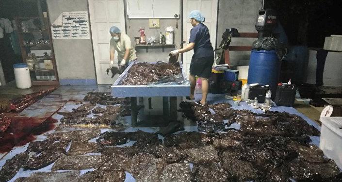 حوت نفق في تايلاند