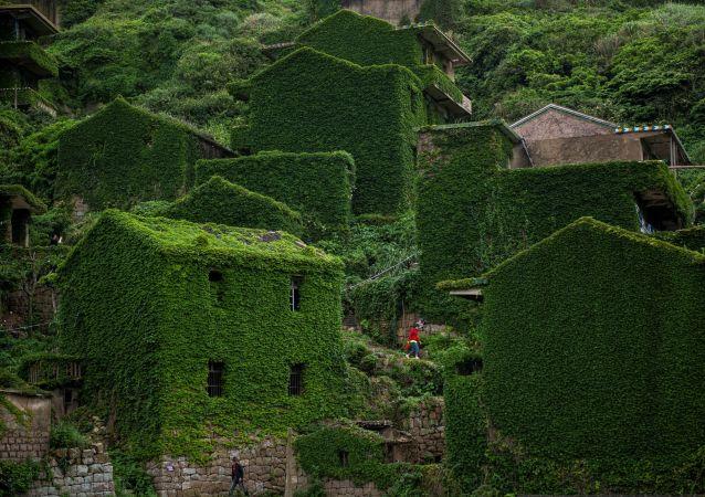 منازل مهجورة مغطاة بالنباتات الكثيفة في قرية هوتوان على جزيرة شينغشان بإقليم تشيجيانغ الشرقي الصيني، 31 مايو/ أيار 2018