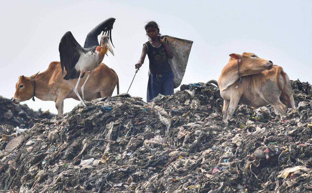 فتاة هندية تبحث عن مواد قابلة للتدوير، في أحد أكبر مواقع للتخلص من النفايات في شمال شرق الهند، قبل يوم البيئة العالمي في منطقة بوراغون في جواهاتي، 4 يونيو/ حزيران 2018