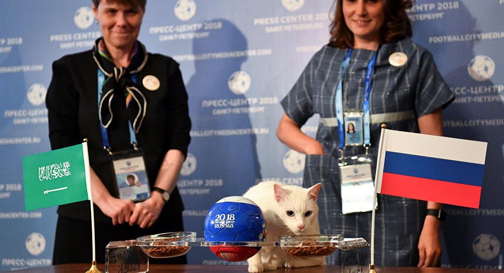 القط أخيل يتنبأ بفوز منتخب روسيا على السعودية في المباراة الافتتاحية يوم غد الخميس