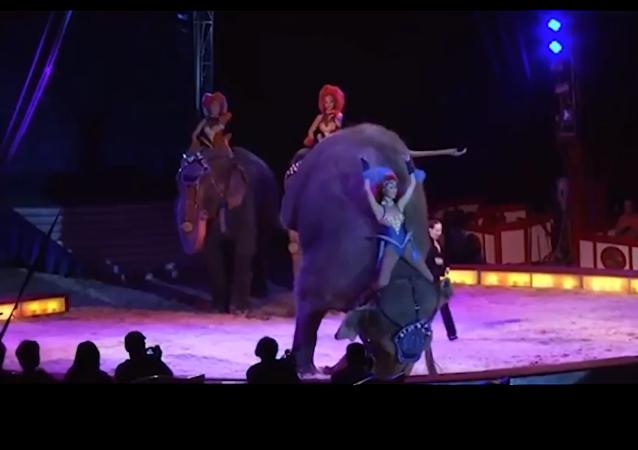 سقوط فيل على الجماهير أثناء أداء عرض في السيرك