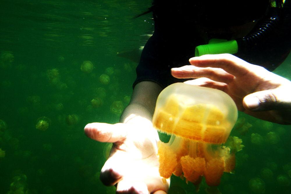 قناديل في مياه بحيرة في بالاو