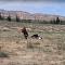 نسر عملاق ينقض على طفلة ويحاول خطفها
