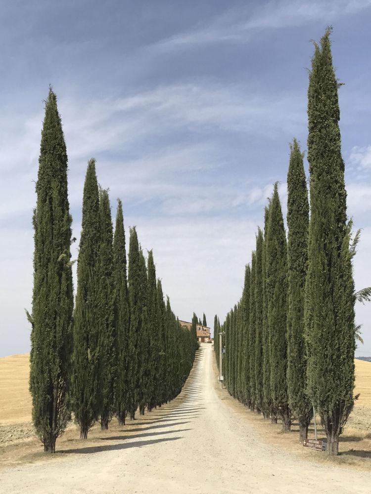 صورة بعنوان Road of Tuscany، للمصورة ليديا مونتيان، الحائزة على المركز الأول في فئة الأشجار