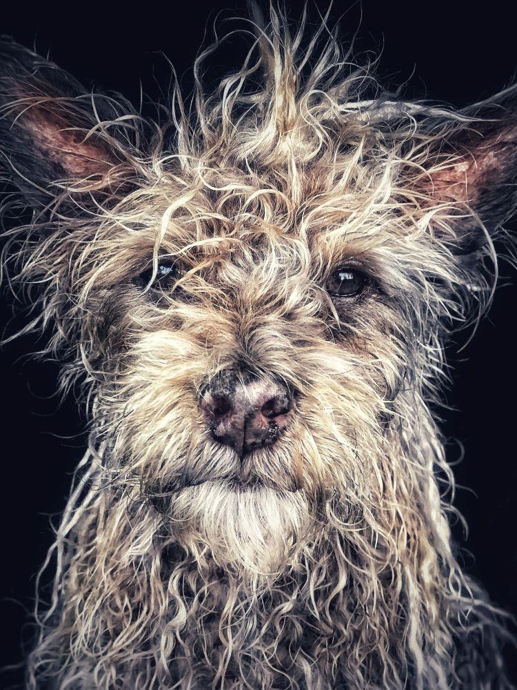 صورة بعنوان Django، للمصور روبن روبيرتيس، الحائزة على المركز الأول في فئة الحيوانات