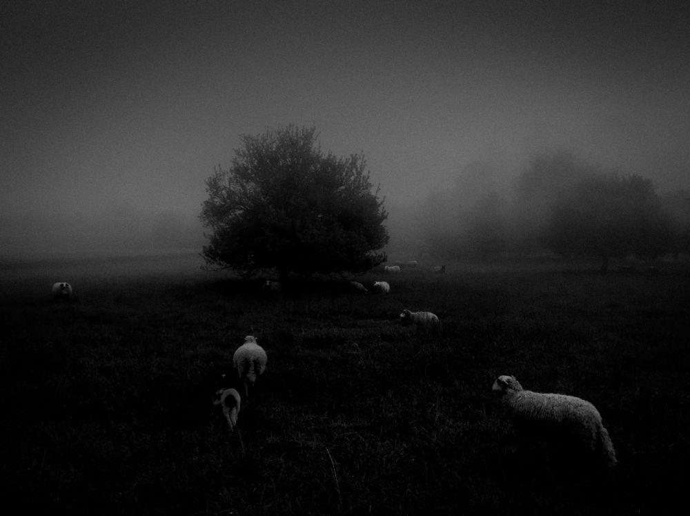 صورة بعنوان Morning Fog، للمصور سكرو محمد عمر، الحائزة على المركز الأول في فئة الطبيعة