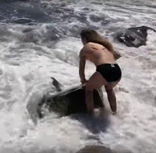 فتاة شجاعة تنقذ حياة سمكة قرش