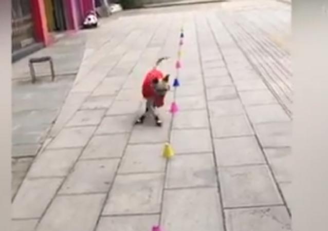 كلب يتقن التزلج بمهارة