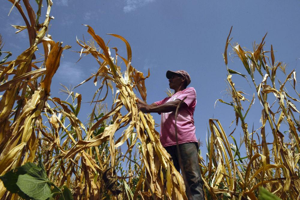 مزارع فقد محاصيله بسبب الجفاف في مدينة أوسولتان، سلفادور 24 يوليو/ تموز 2018
