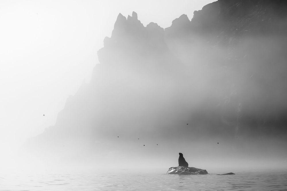 صورة بعنوان الحالم، للمصورة يكاترينا فاسياغينا، الحاصلة على المركز الأول في فئة الحيوانات، في مسابقة التصوير لشركة Nikon