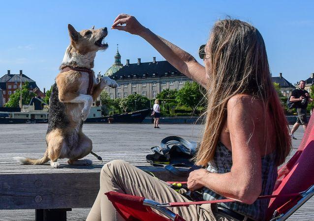 فتاة تطعم كلبًا على الواجهة البحرية في كوبنهاغن، الدنمارك