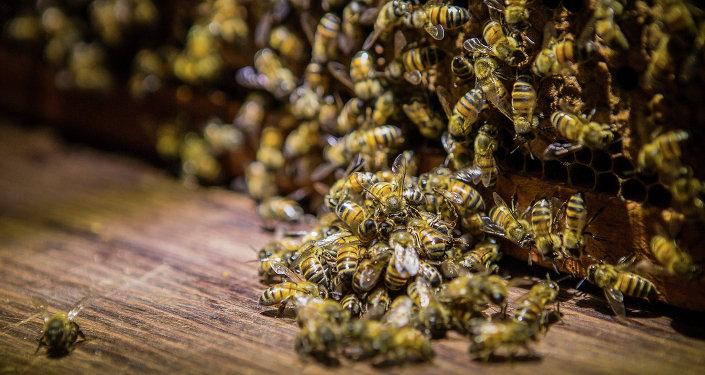 سرب من النحل
